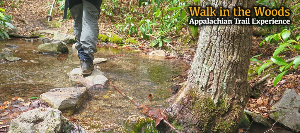 Walk in the woods: Your stepping stone to adventure